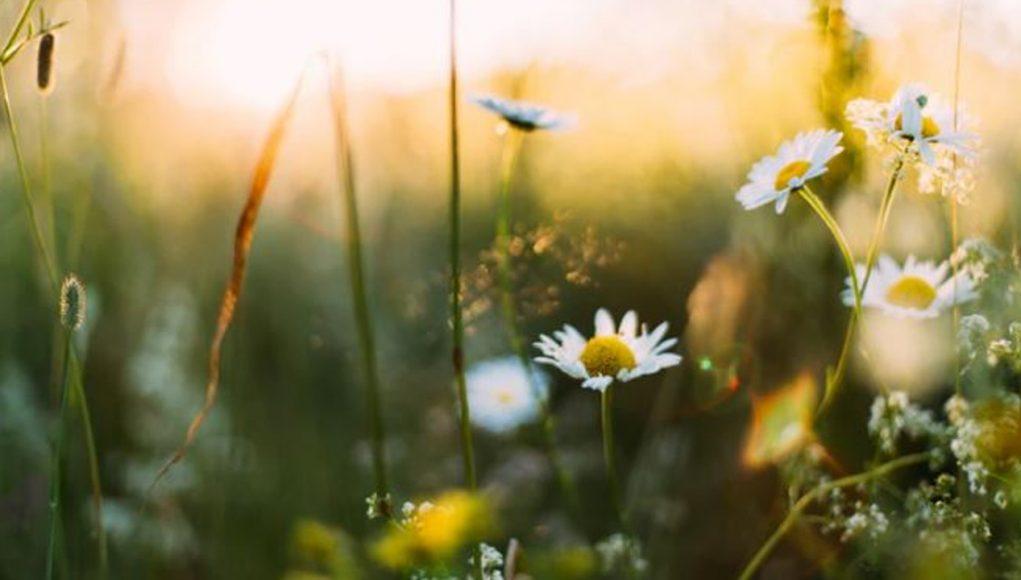 Voorjaar - de toekomst lacht je tegemoet