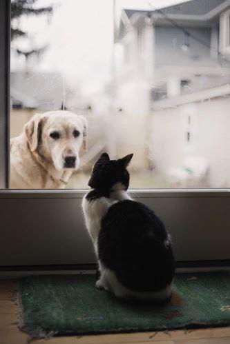 Hond bezoekt kat achter raam