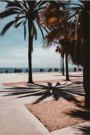 Kokospalmen op de boulevard