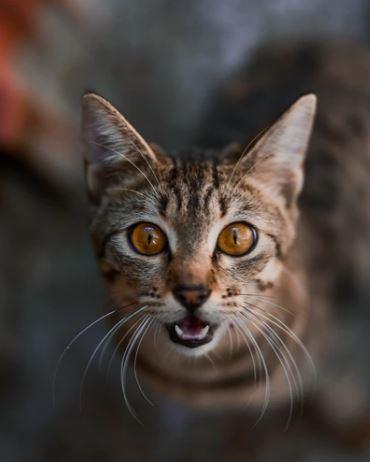 Kat herkent zichzelf niet