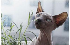 Wat is de horoscoop van de kat