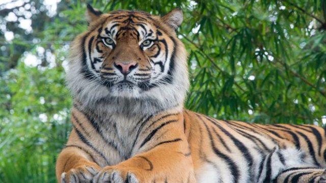 Durf jij die Celtic Tiger te bezoeken
