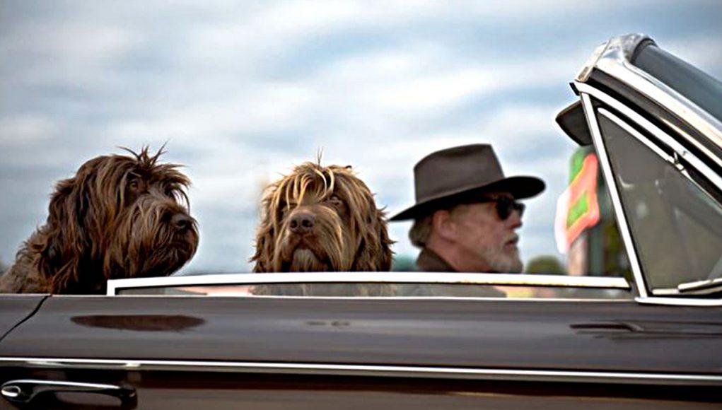 Welke hond het best past bij welke Single is een puzzel - Labradoodels