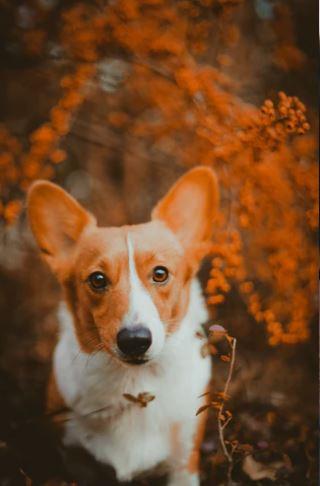 Welke hond het best past bij welke Single is een puzzel!