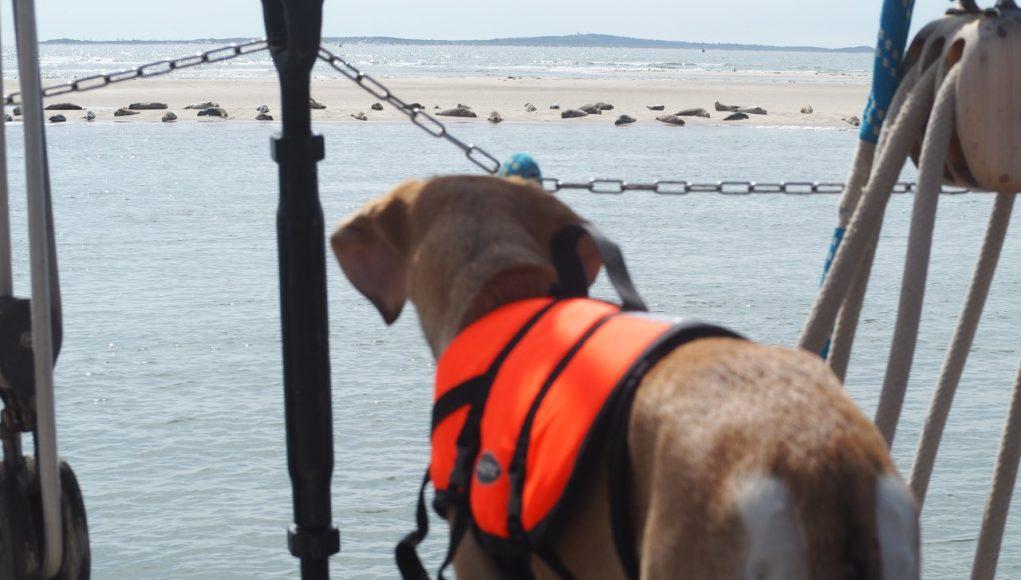 Single Summer Sailing met scheepshond op het voordek